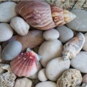 ShellsNStones